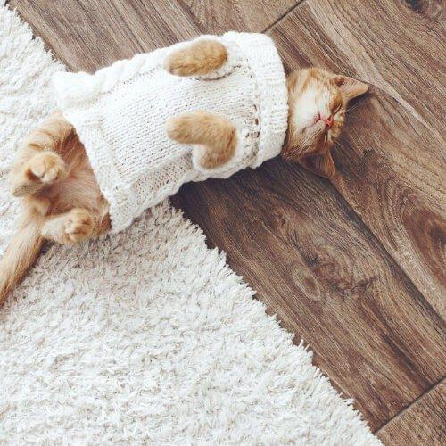 Pet Friendly Hardwood Floor | Terry's Floor Fashions